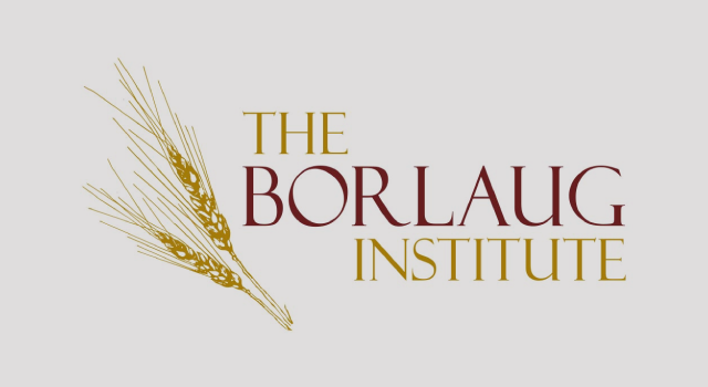 Borlaug Institute